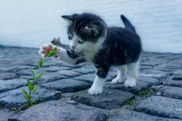 cat-2536662_1920.jpg